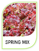 Products Spring Mix